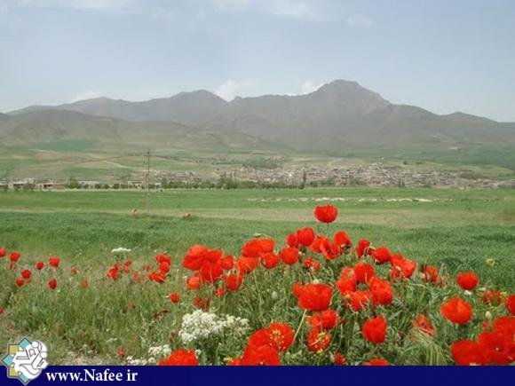 نمایی از روستای رسول آباد -اسدآباد در پشت شقایق