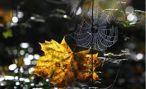 پاییز رویایی ...