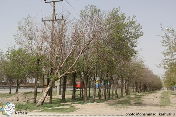 قطع درختان بدون داشتن مجوز