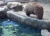 نجات کلاغ از غرق شدن توسط خرس