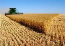 تولید گندم در کبودراهنگ دو برابر شد