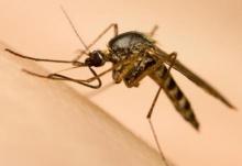 اولین واکسن مالاریا در جهان تایید شد؛ سالانه نیم میلیون نفر قربانی