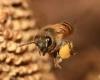 افزایش9درصدی تعداد زنبورداران در همدان