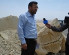 کشف دو فسیل گاو دریایی در شیرین سو + عکس