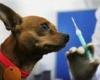 قلاده گذاری سگ های ولگرد در کبودراهنگ