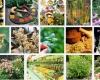 گیاهان دارویی همدان گونه هایی با ارزش اقتصادی