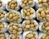 شهرستان بهار رتبه اول کشوری را در کشت محصول سیب زمینی به دست آورد