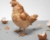 پوست تخم مرغ و این همه کاربرد