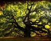 کهن سال ترین درخت گردوی غرب کشور در نهاوند قرار دارد